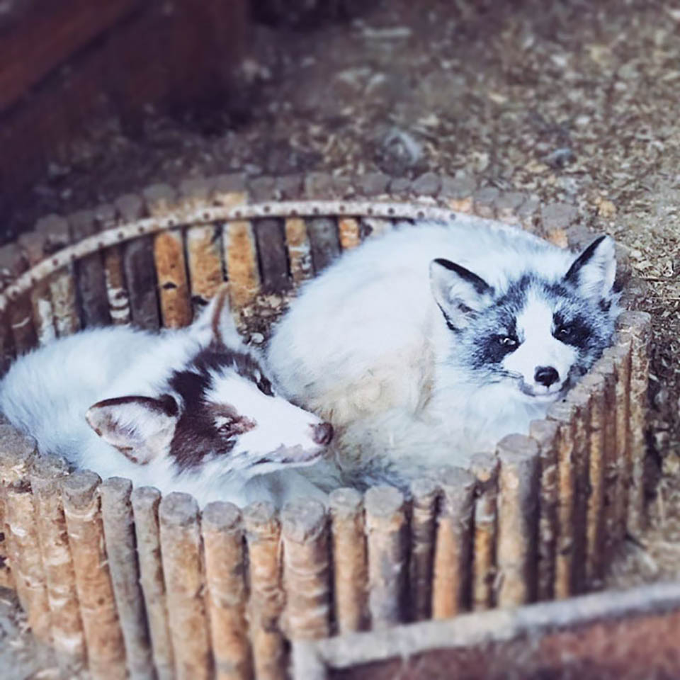 Animales descansan