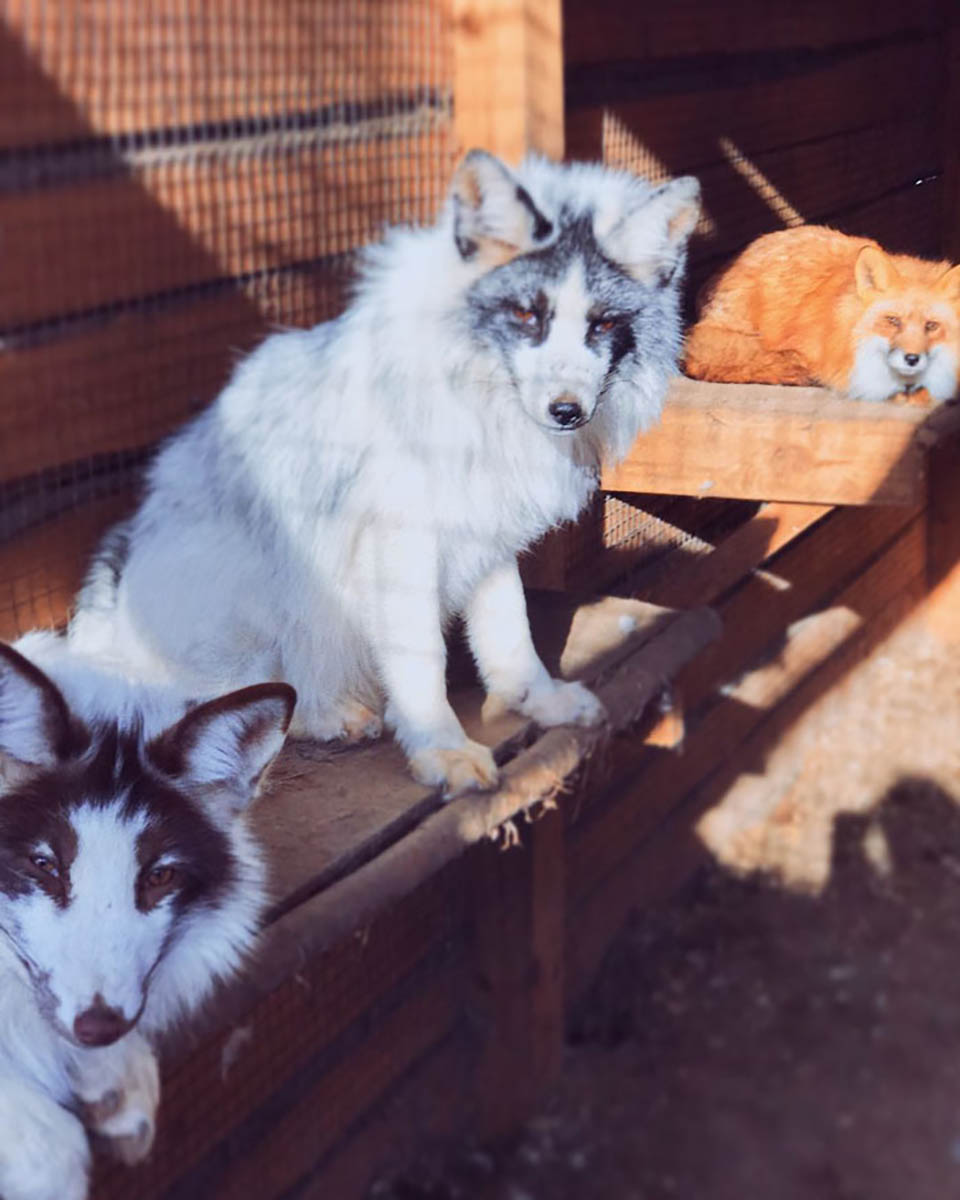 Animales son bien cuidados en santuario