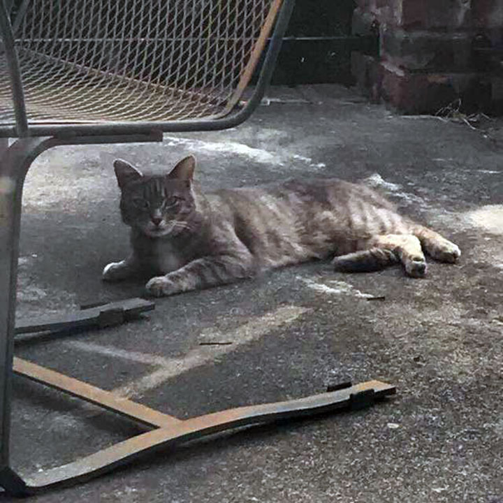 Baby Gray en el porche