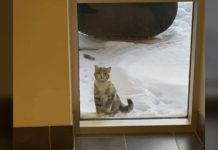 Bomberos miran afuera de la ventana de la estacion y ven a alguien que los necesita