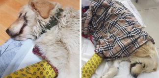 Cachorro encontrado con los labios cortados como El Guason