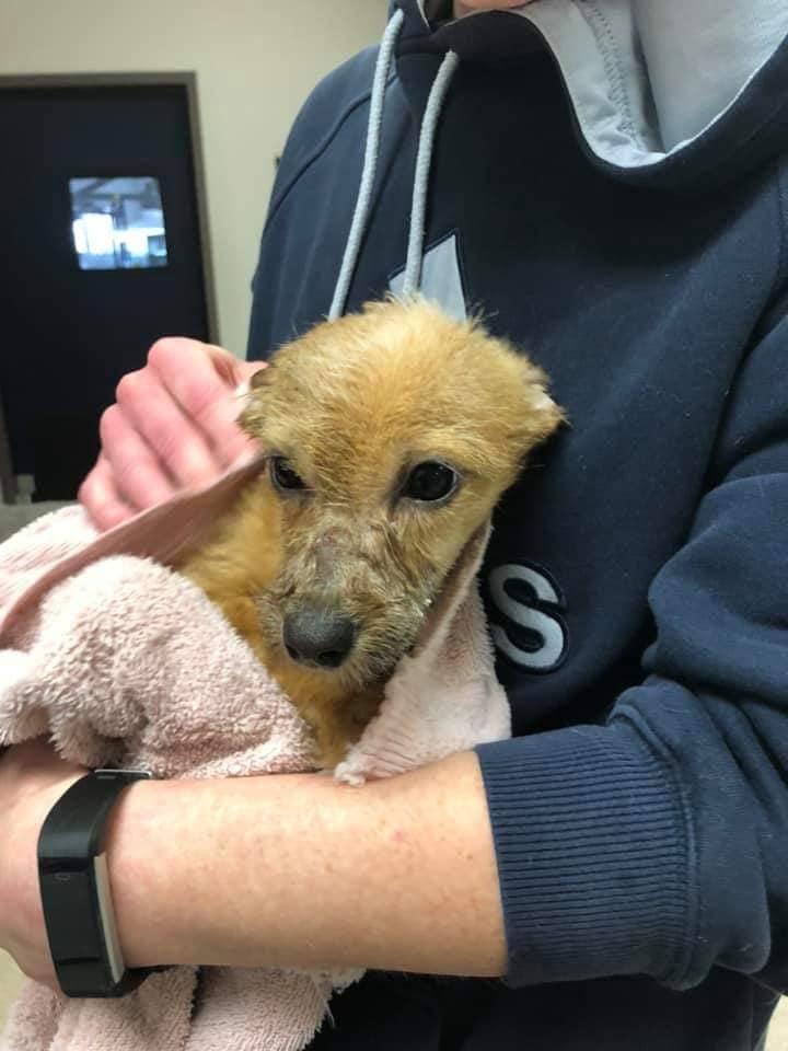 Cachorro rescatado en recuperación