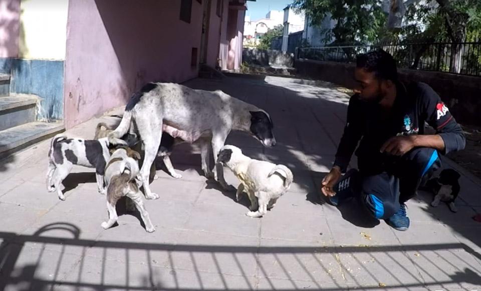 Cachorro se reúne con su familia