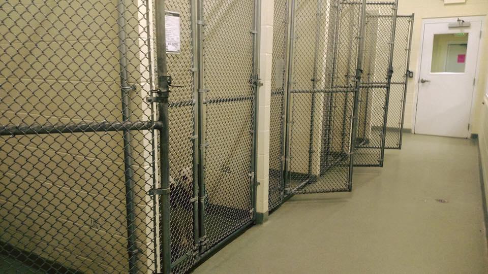 Capone es el último perro del refugio