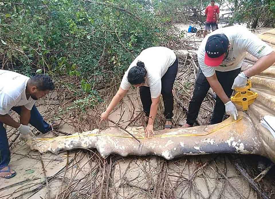 Cientificos inspeccionan restos de ballena encontrada misteriosamente