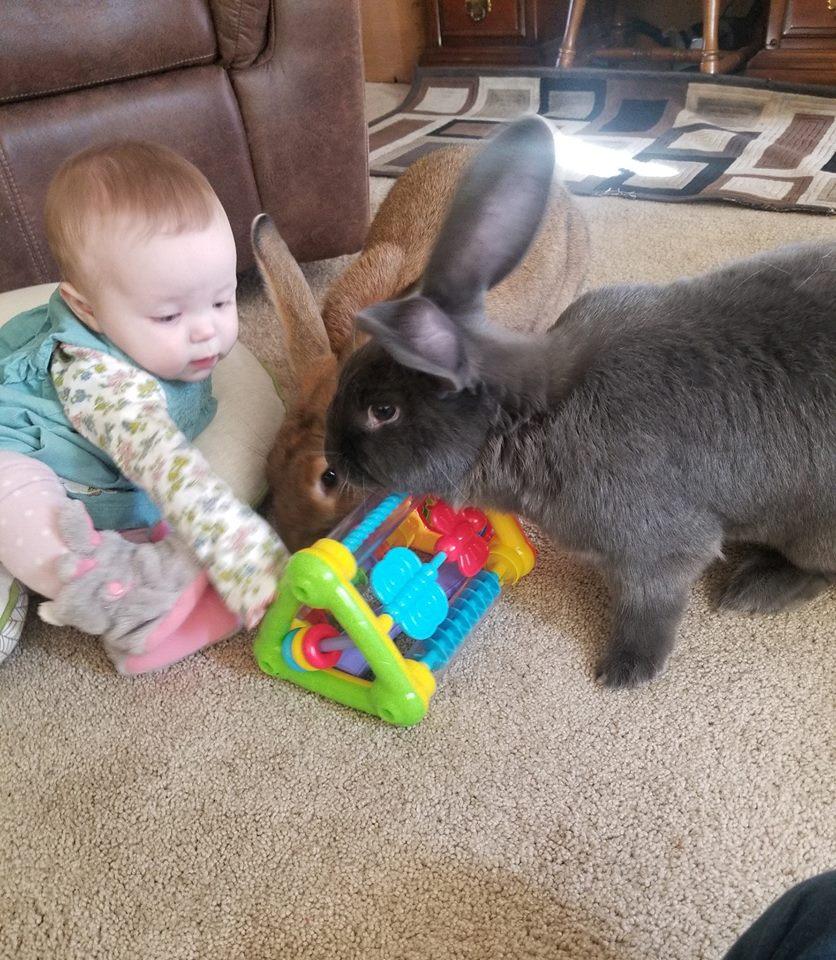 Conejos y bebé