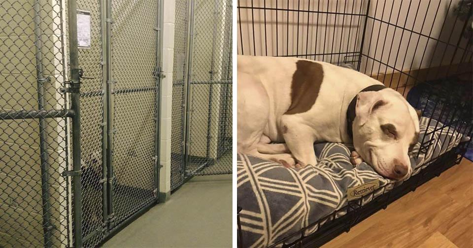 El último perro del refugio sonríe cuando se va a casa