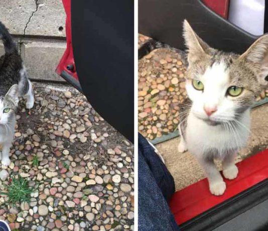 Familia expulsa de la casa a una gatita embarazada porque tienen perros