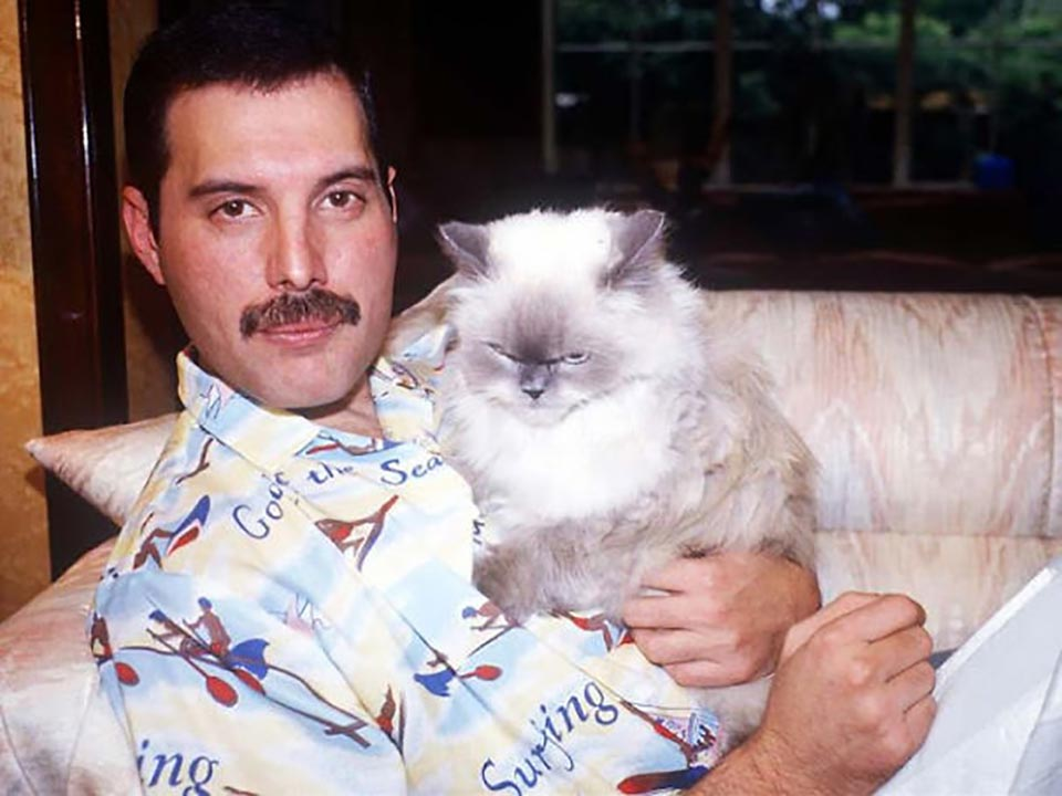 Freddie Mercury abraza a uno de sus gatos