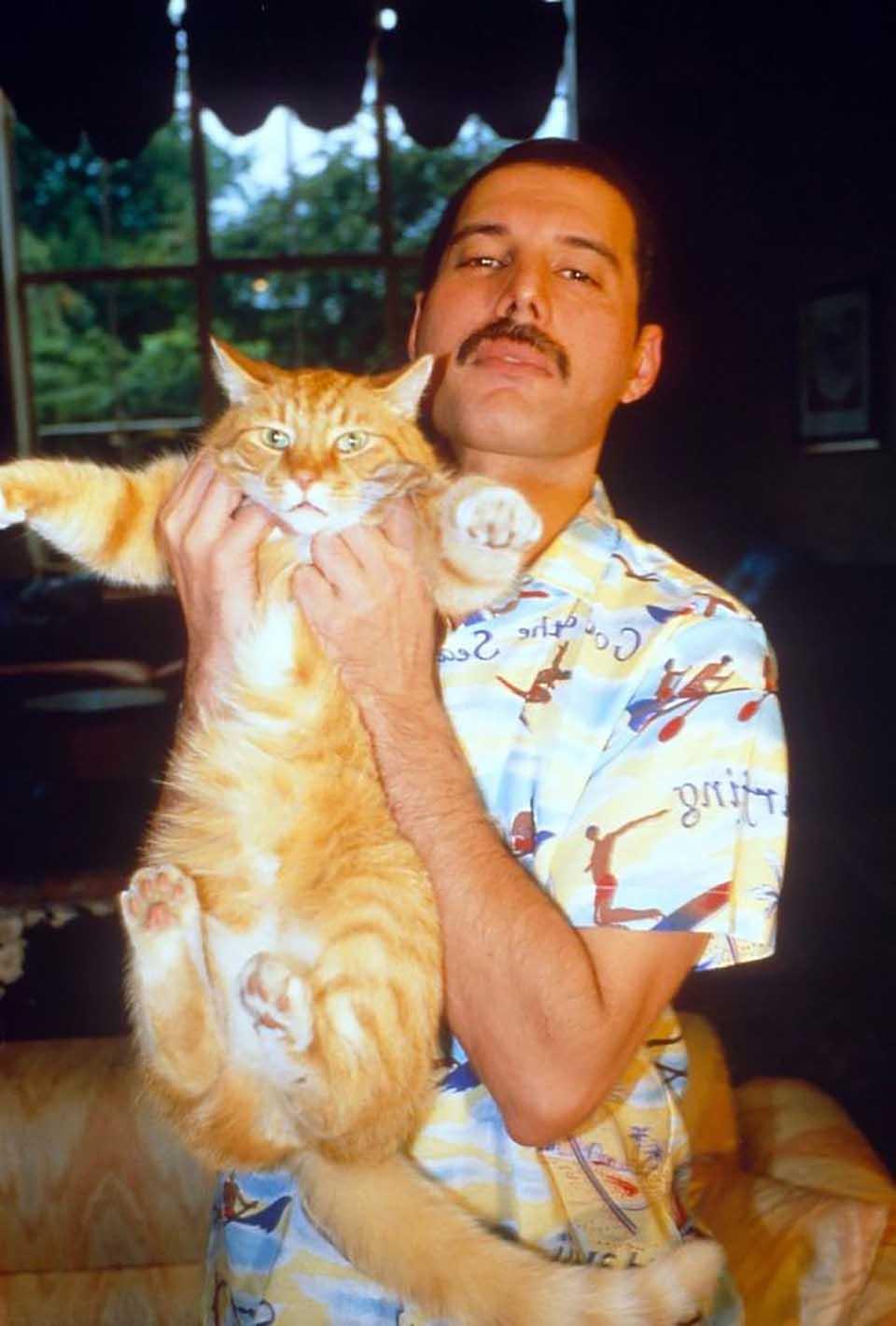 Freddie Mercury alza a gatito
