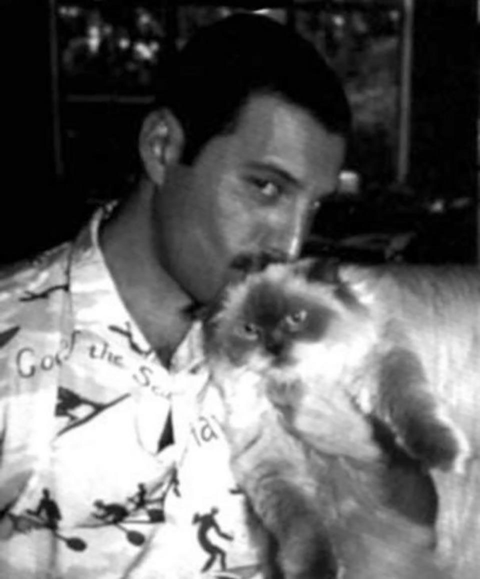 Freddie Mercury besa a gatito