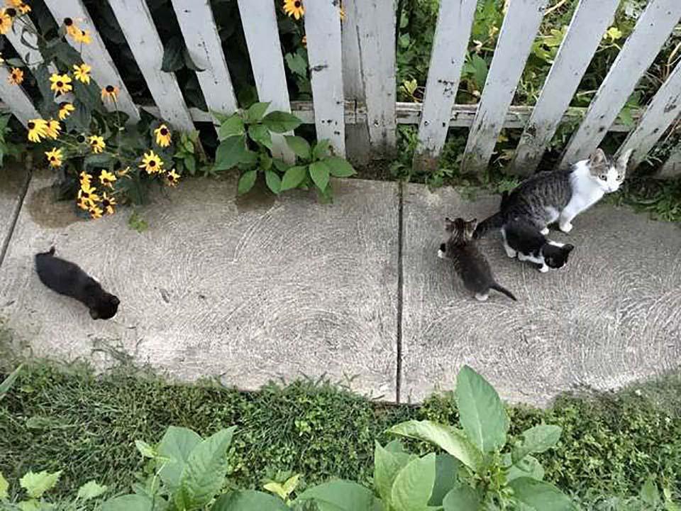 Gata y sus bebes en jardin