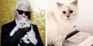 Gatita sera la heredera de la fortuna del famoso diseñador Karl Lagerfeld