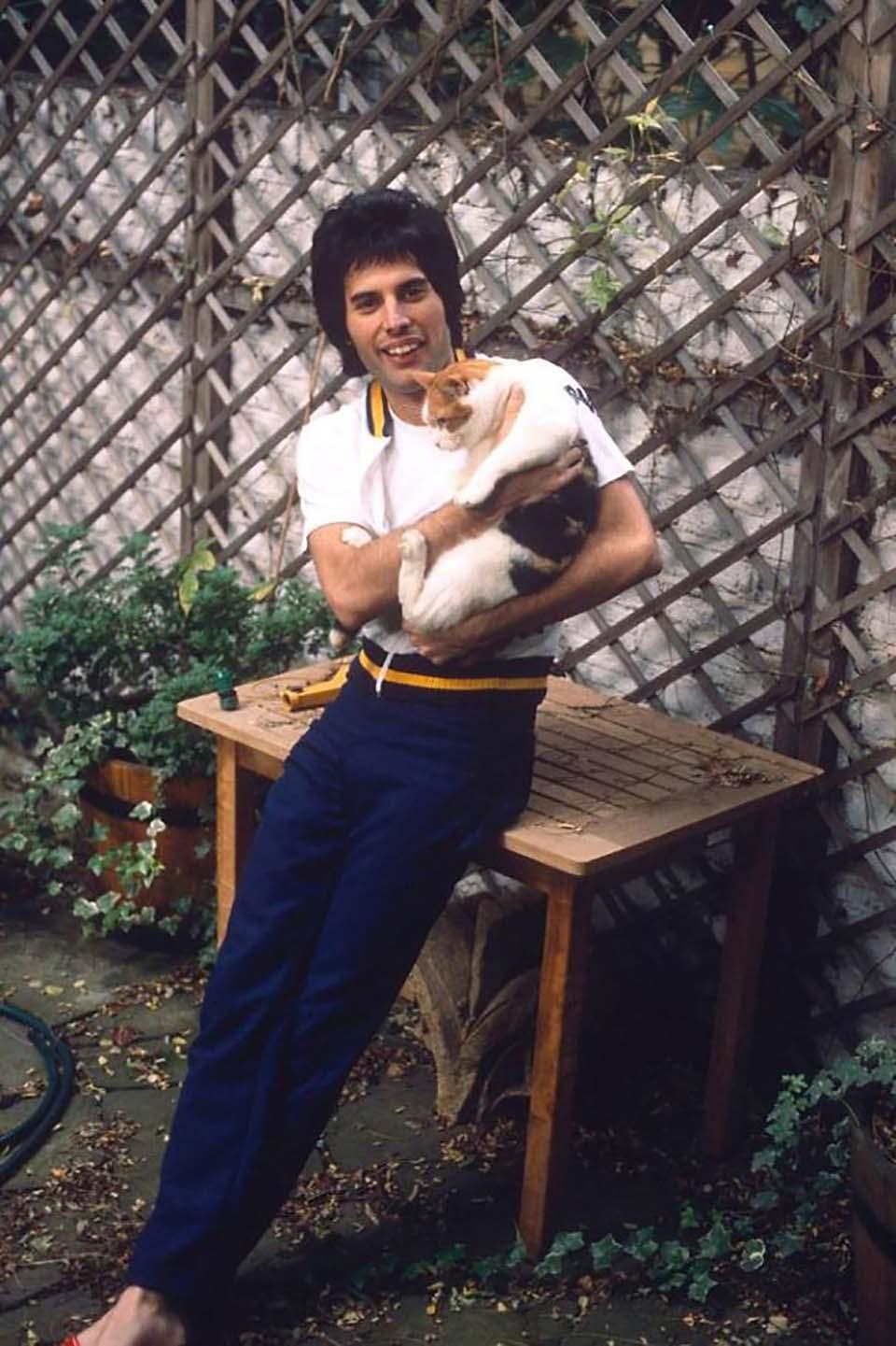 Gatito recibe cariño de Freddie Mercury