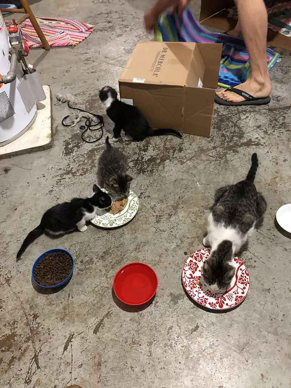Gatitos alimentandose