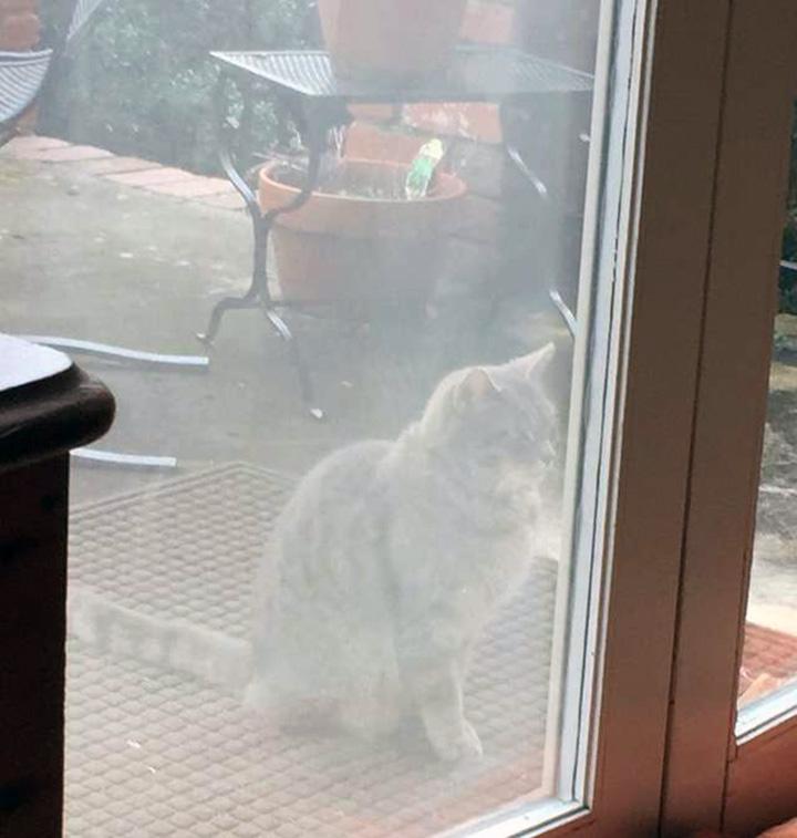 Gato buscando a su mejor amiga