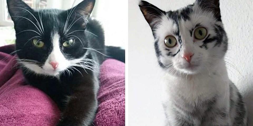 Gato con rara condición cambia de color