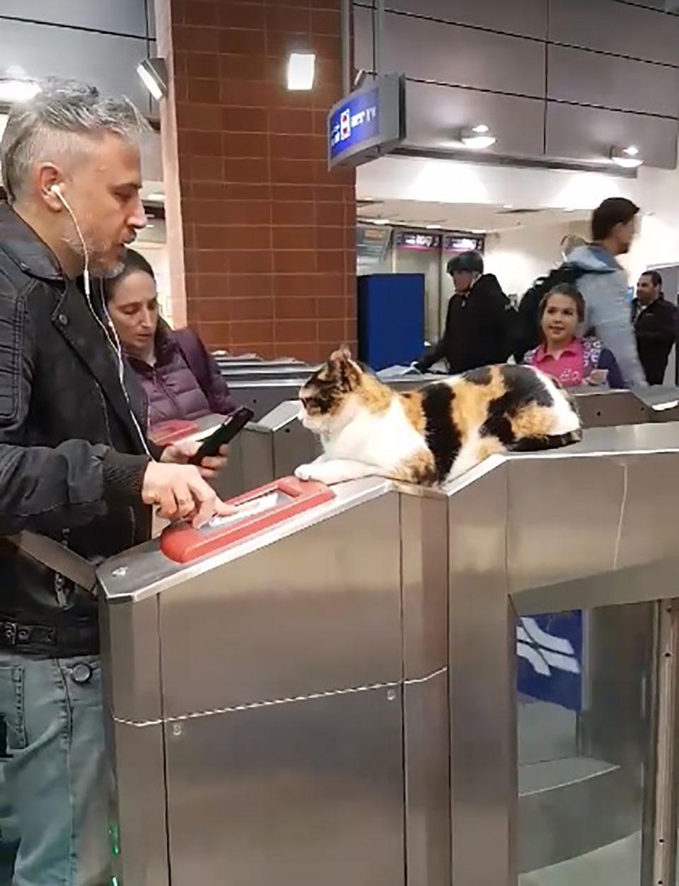 Gato descansa relajadamente mientras saluda a viajeros