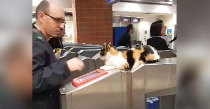Gato recibe a cientos de viajeros en la estacion de trenes todos los dias