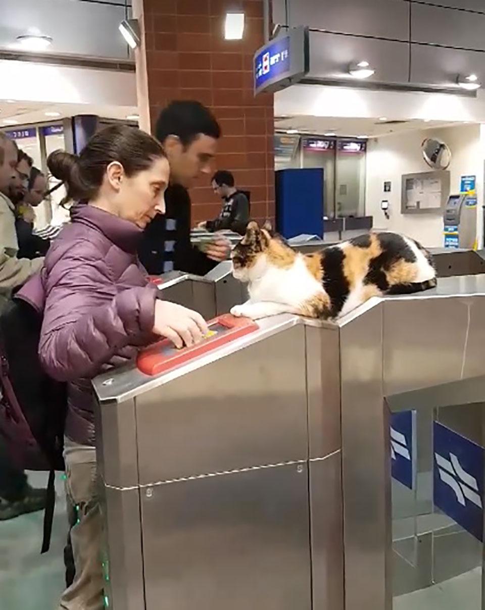 Gato recibe a mujer en estacion de tren
