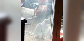 Gato visita la ventana del vecino buscando a su mejor amigo fallecido