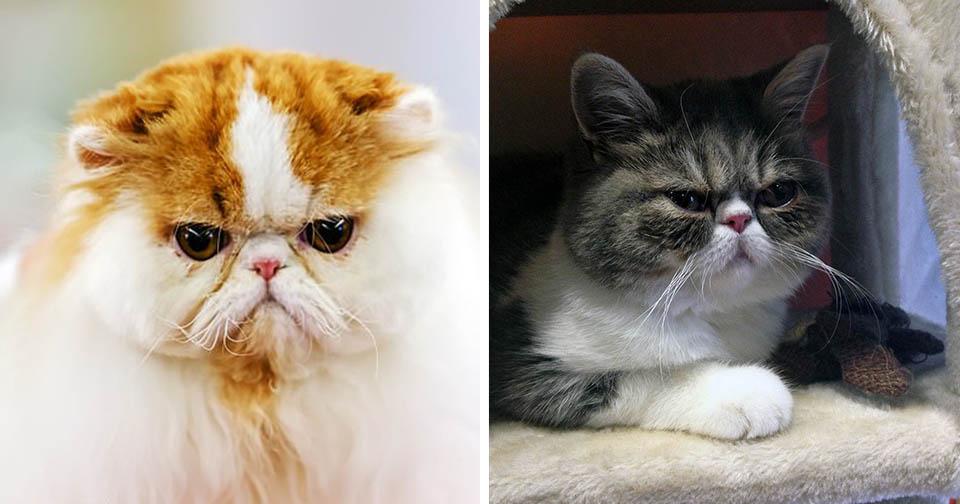 Gatos desarrollan personalidades parecidas a sus humanos