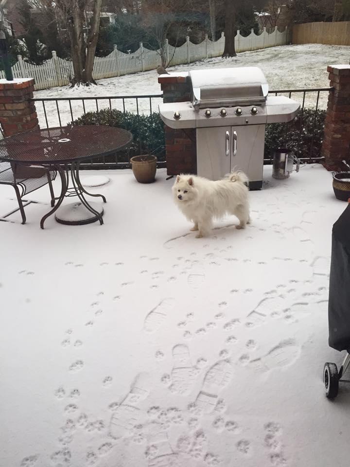 Gracie en la nieve