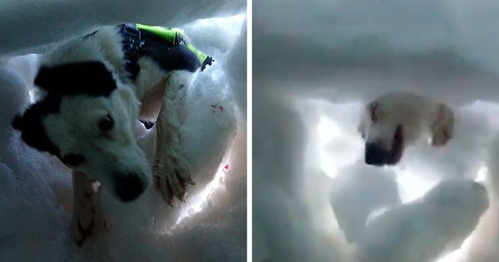 Hombre enterrado en la nieve graba al perro que lo salvó