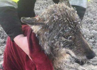 Hombres salvan a un perro que se ahogaba en un rio congelado