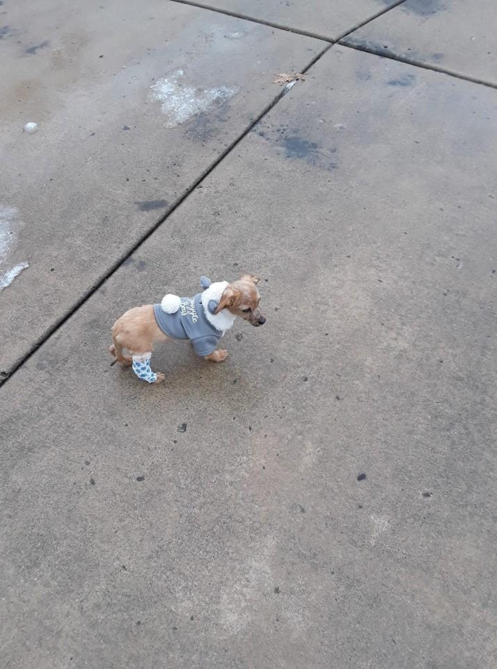 Louie adoptado