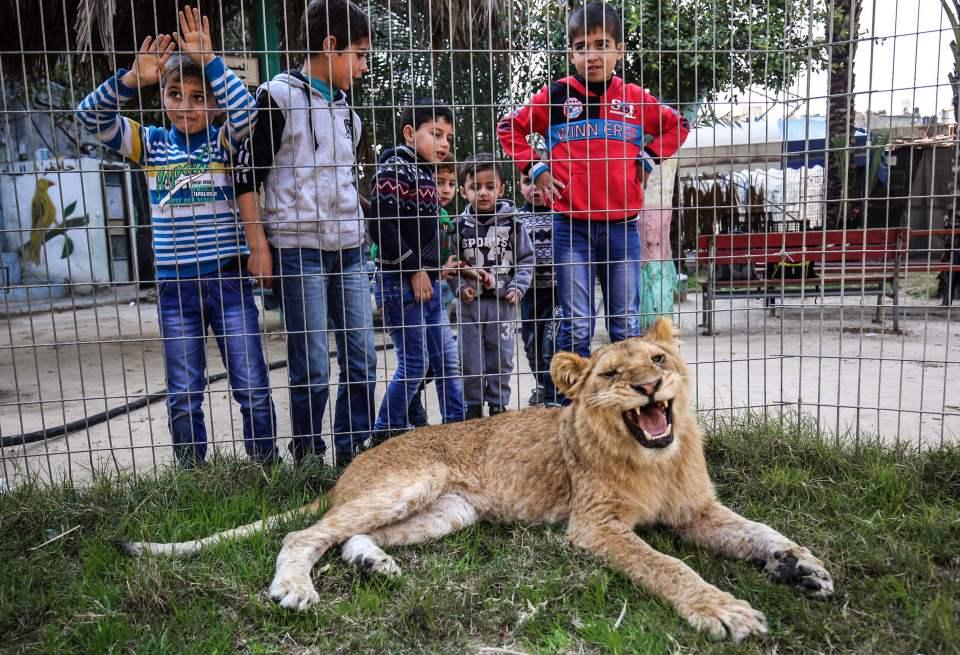 Niños y leona