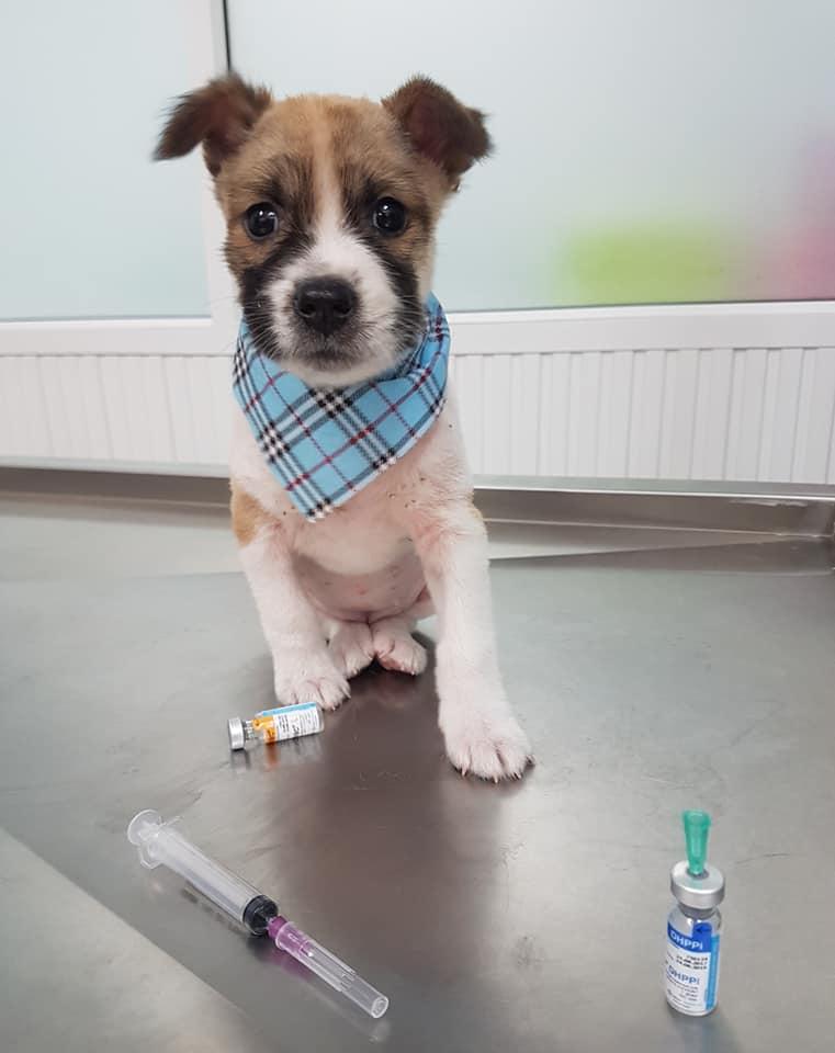 Nong Chom en el veterinario