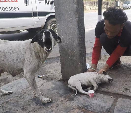 Perra llora de angustia por su cachorro herido