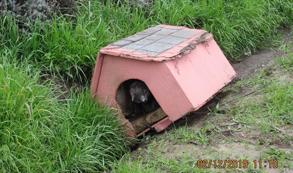 Perrita abandonada a un lado de la carretera en una caseta para perros