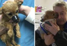 Perrito encontrado con la boca atada con cinta le agradece a su salvador