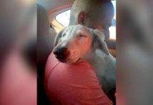 Perrito rescatado se relaja cuando sabe que va a casa