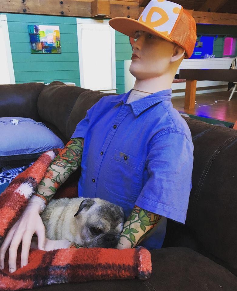 Perro abraza a maniquí