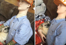 Perro extraña a su papá y se acurruca con un maniquí