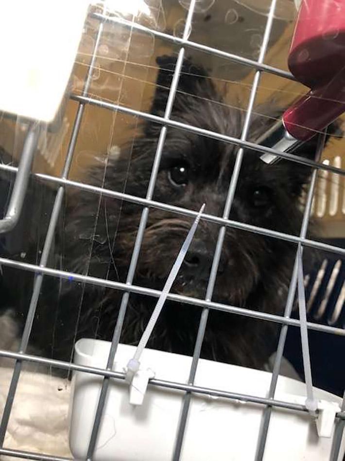 Perro rescatado de Corea del Sur