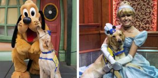 Perro se encuentra con sus personajes favoritos en Disneyland