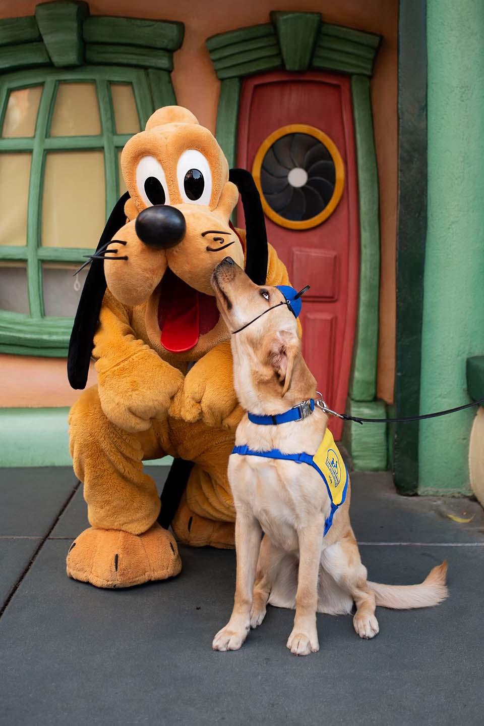 Perro y personaje Pluto