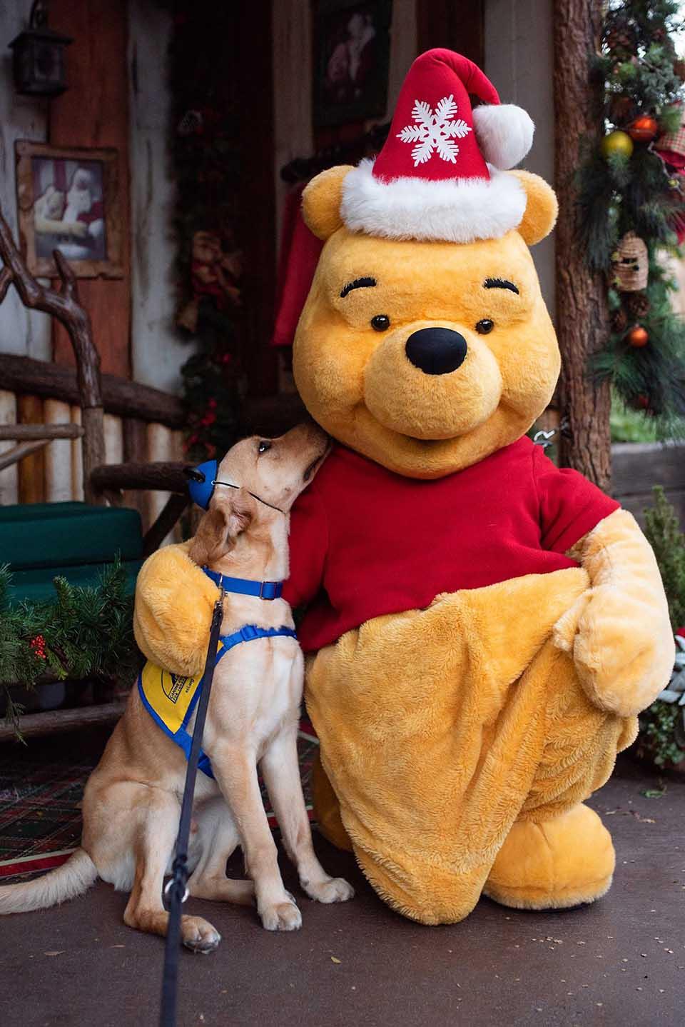 Perro y personaje Winnie Pooh
