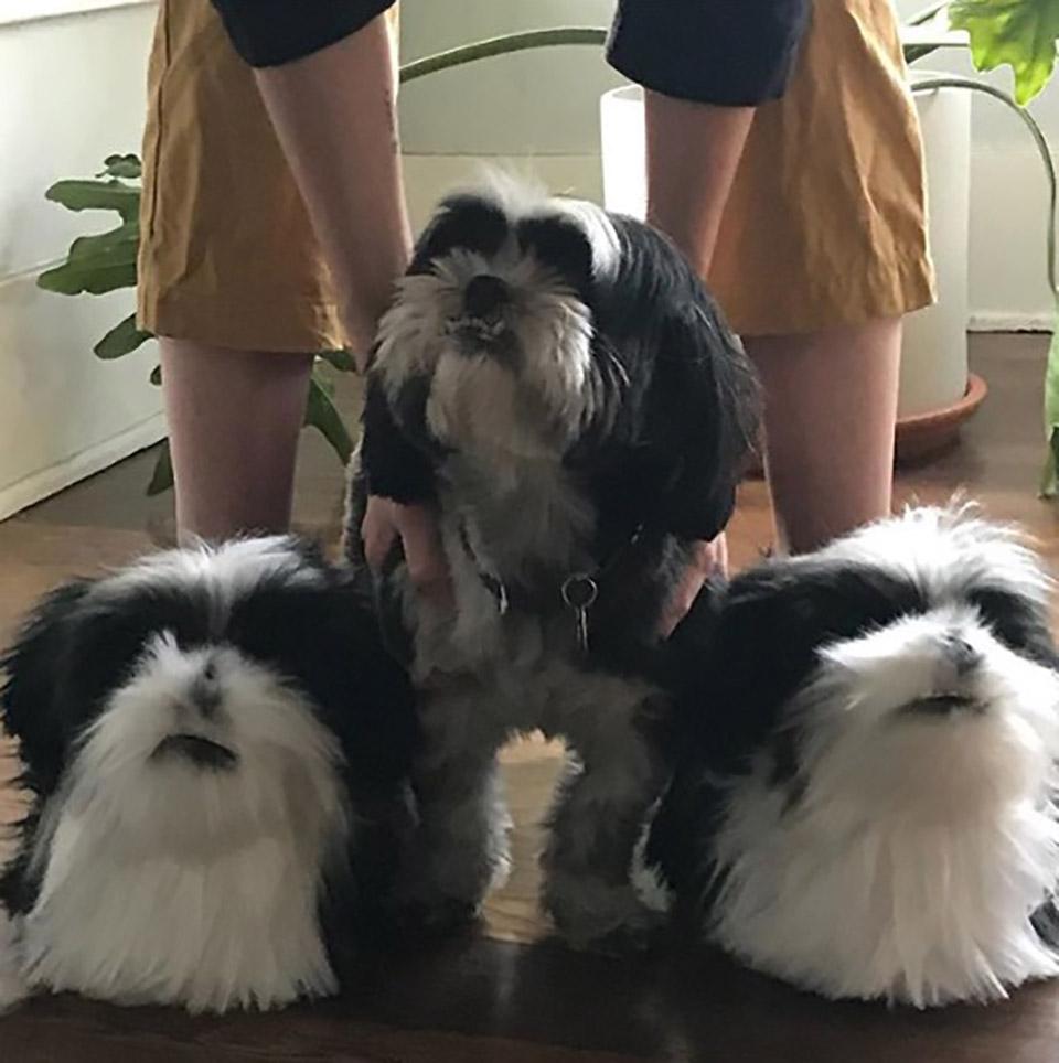 Perro y zapatillas colores blanco y negro