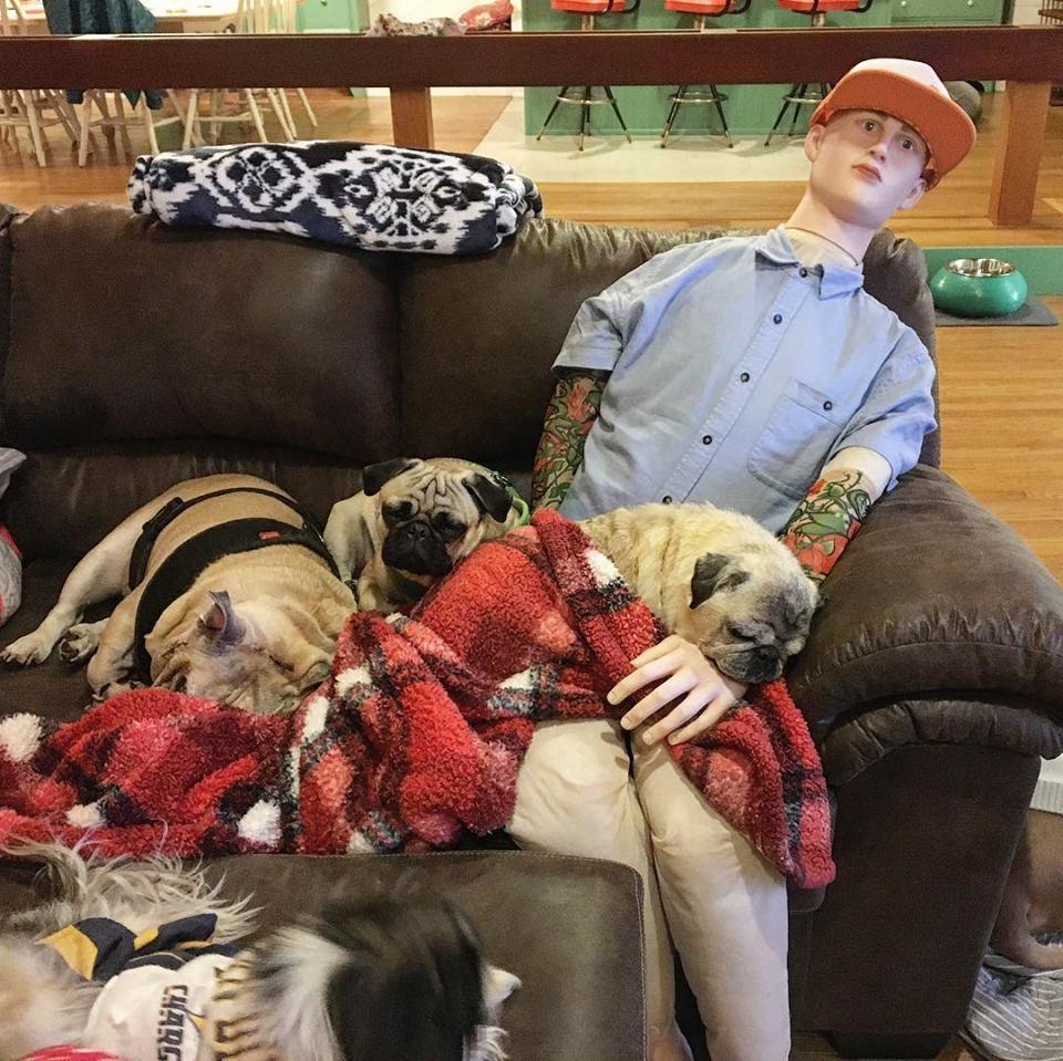 Perros duermen junto a maniquí
