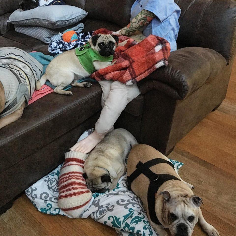 Perros junto a maniquí