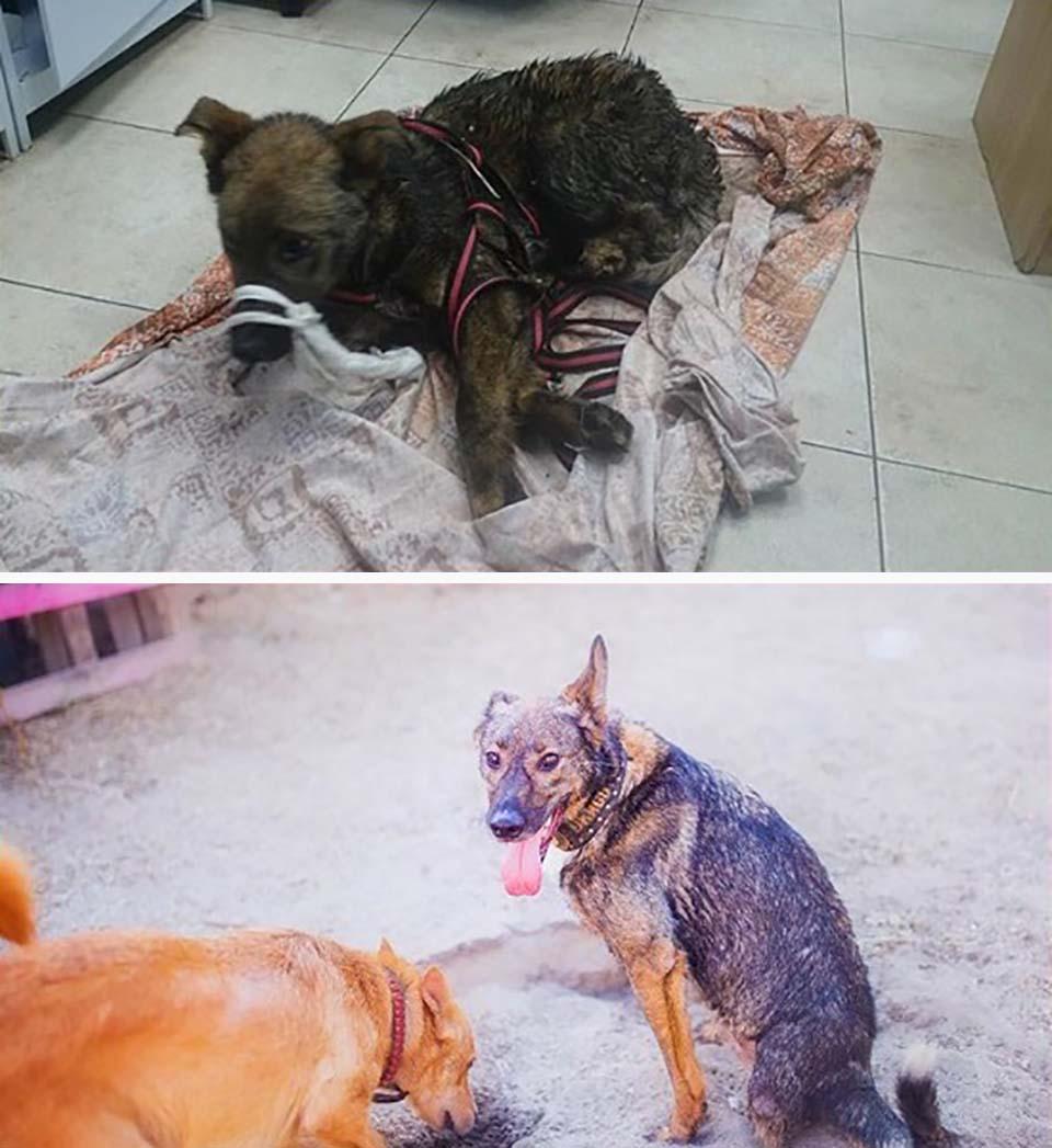 Rescate de perrito