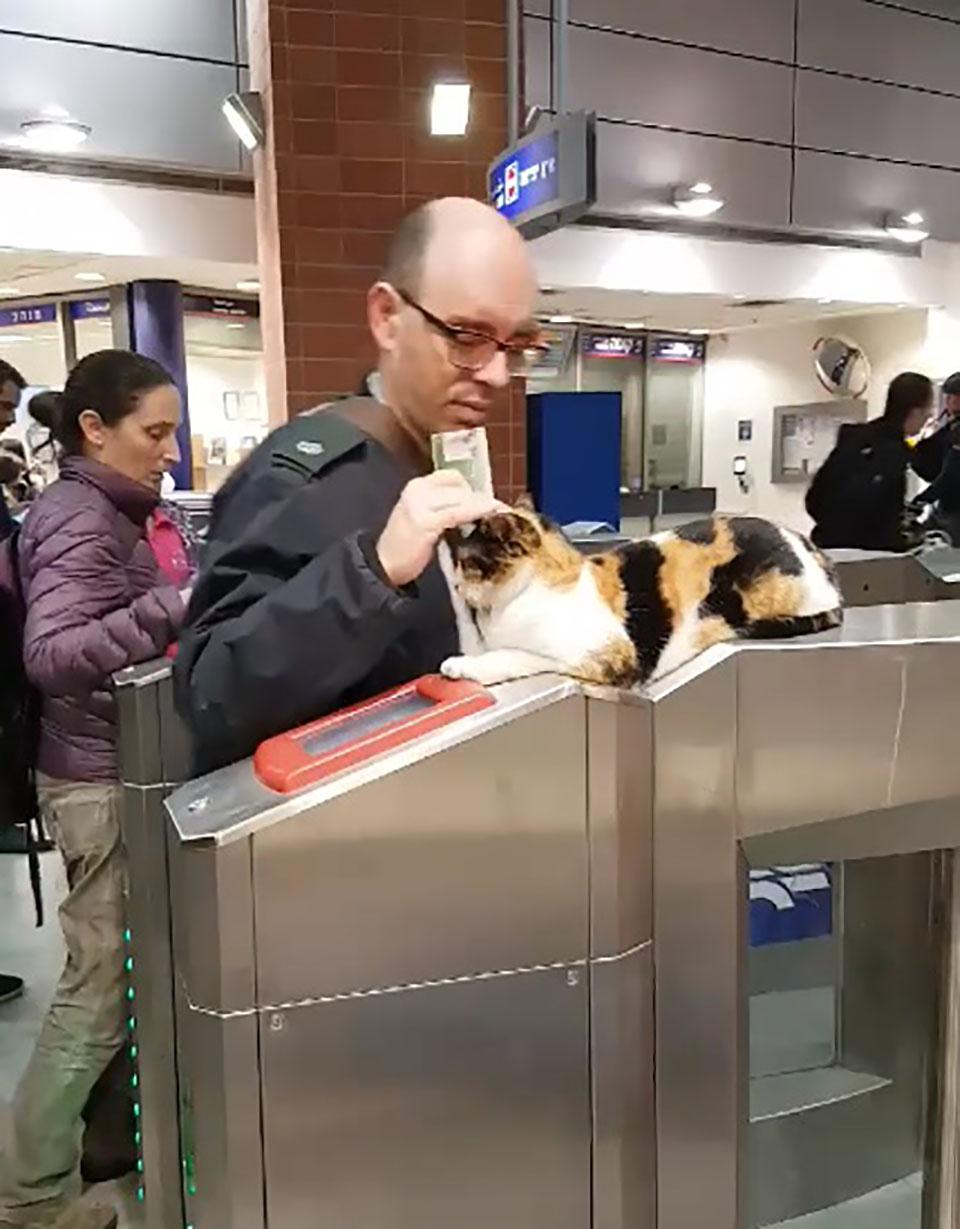Viajero es recibido por adorable gato