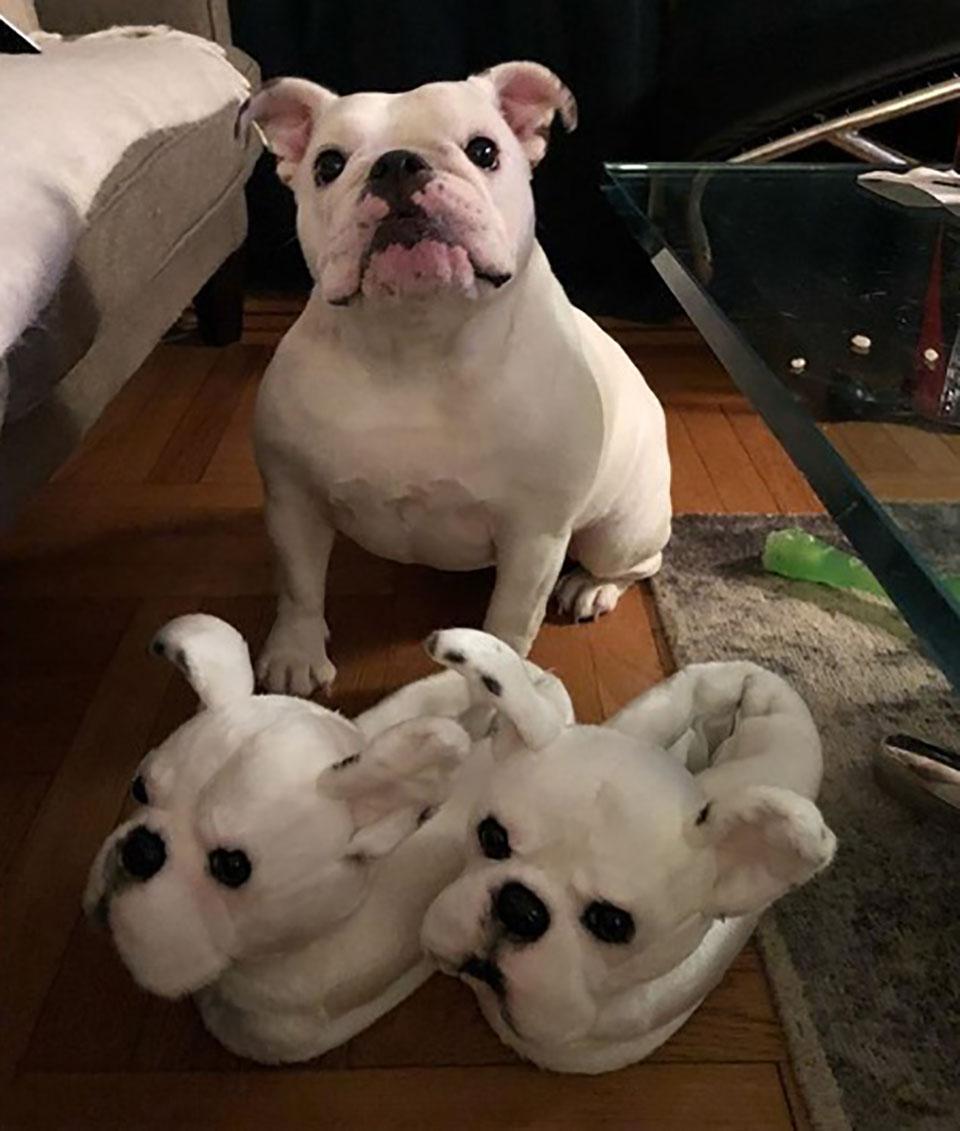 Zapatillas Raza Bulldog