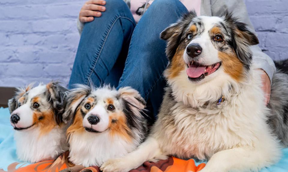 Zapatillas identicas a perro real