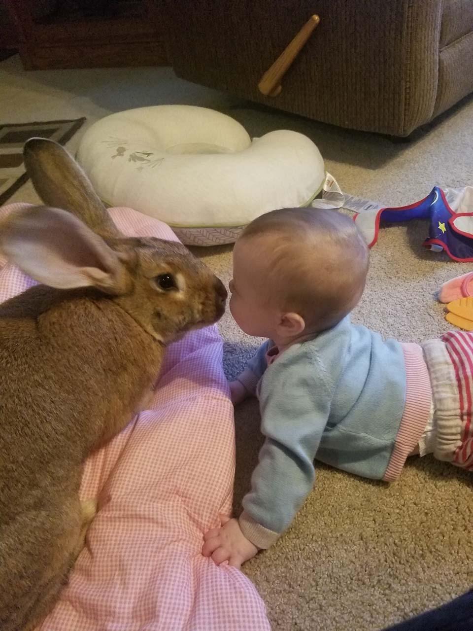 conejo marron y bebe